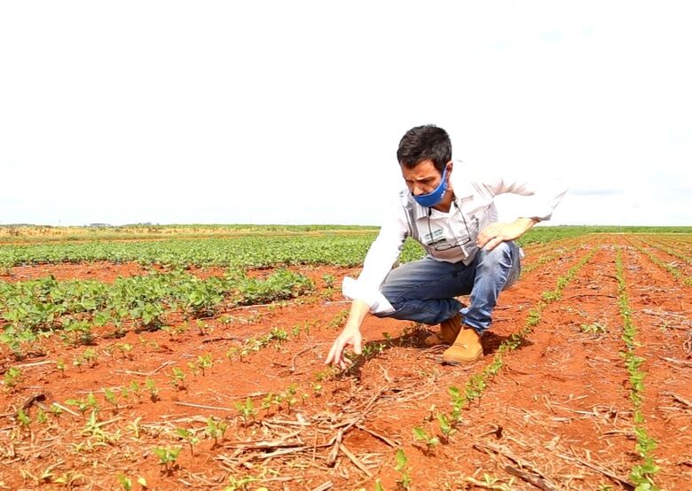 Fundação Chapadão experimenta em torno de 60 variedades de soja -